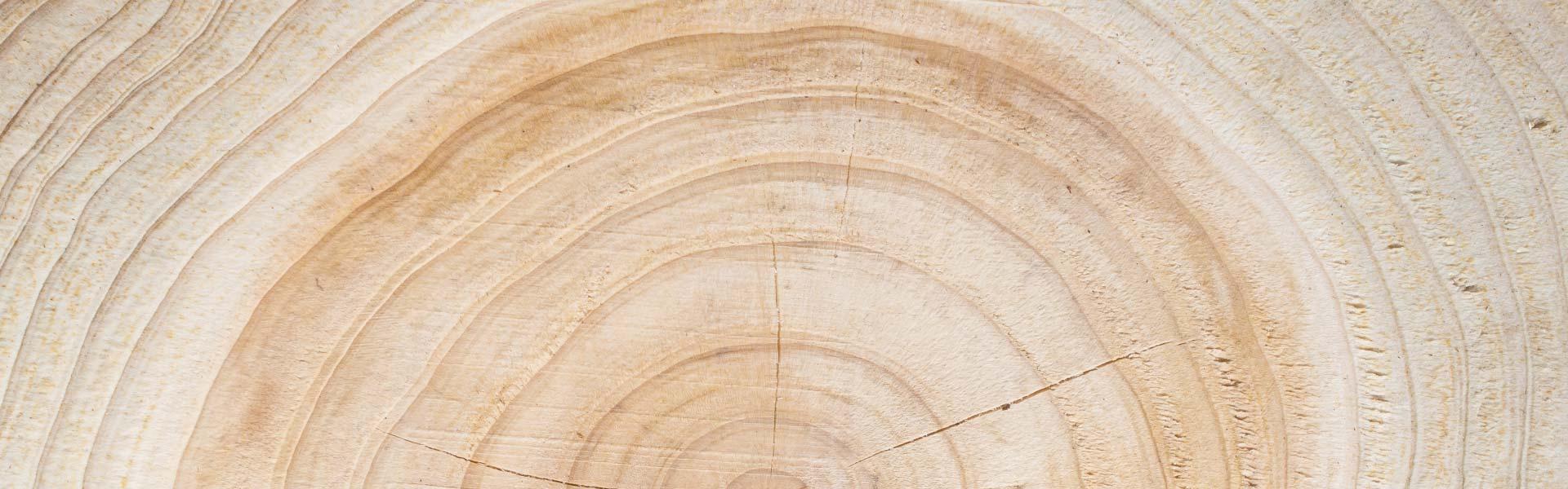 Jahresringe eines Baumes
