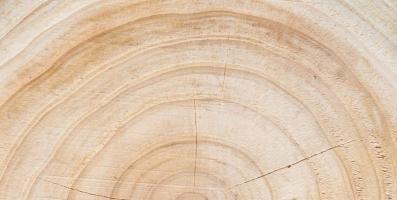 Anéis de uma árvore